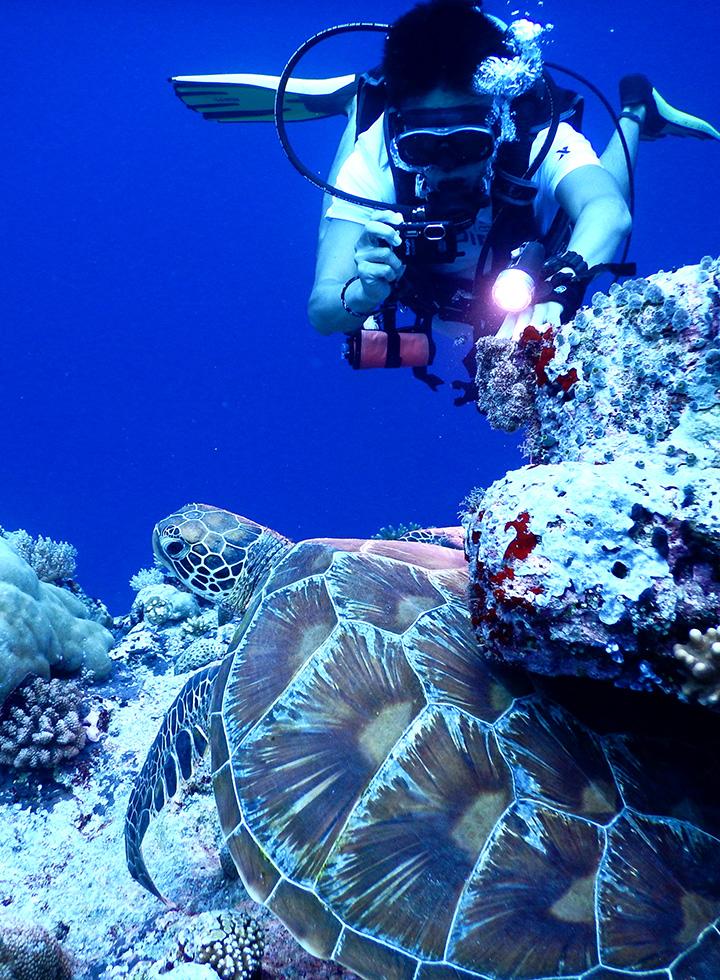 潛水天堂在帛琉